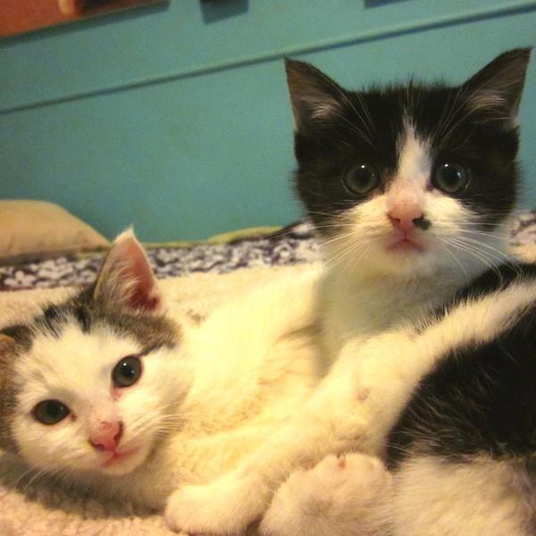 Sarah Donner Rescue Kittens